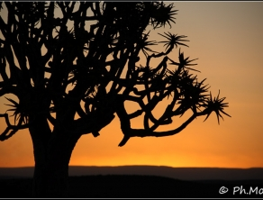 Namikala Paysages